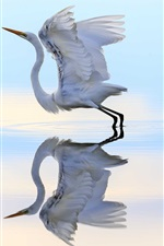 Preview iPhone wallpaper Heron ready to flying, wings, water, reflection