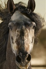 Preview iPhone wallpaper Horse front view, mane, wind