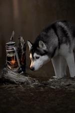 iPhone fondos de pantalla Perro Husky, lámpara, oscuridad