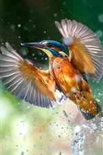 Preview iPhone wallpaper Kingfisher flight, wings, water splash, lake surface