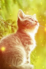 Preview iPhone wallpaper Kitten look at fish, creative picture