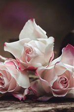 Preview iPhone wallpaper Light pink roses, blurry background