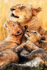 Preview iPhone wallpaper Lions, lioness, cubs, Africa