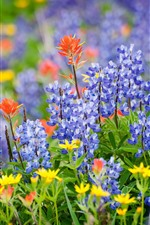 Preview iPhone wallpaper Lupin blue flowers, summer