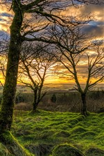 Preview iPhone wallpaper Northern Ireland, UK, nature landscape, grass, trees, clouds, sunset