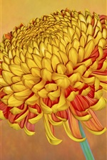Preview iPhone wallpaper Orange chrysanthemum, flower close-up