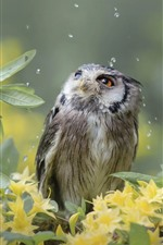 Preview iPhone wallpaper Owl, rain, yellow flowers