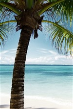 iPhone fondos de pantalla Palmera, hojas verdes, mar, azul, trópico