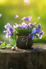 Preview iPhone wallpaper Pansy, purple flowers, stump