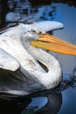Preview iPhone wallpaper Pelican, long beak, water