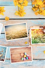 Preview iPhone wallpaper Photos, flowers, camera