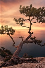 Preview iPhone wallpaper Pine tree, sea, sunset