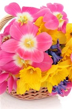 Preview iPhone wallpaper Pink and yellow flowers, white background