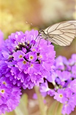 Pink flowers, butterfly, spring