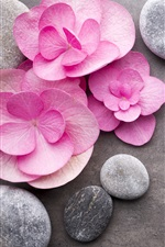 Preview iPhone wallpaper Pink flowers, stones, SPA theme