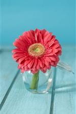 iPhone обои Розовый цветок герберы, стеклянная ваза