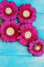 Preview iPhone wallpaper Pink gerbera flowers, blue wood background