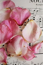 Preview iPhone wallpaper Pink rose petals, music score