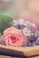 Preview iPhone wallpaper Pink rose, purple flowers, book, hazy