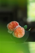 Preview iPhone wallpaper Pink roses, bowl, green hazy