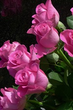 Preview iPhone wallpaper Pink roses, flowers, black background