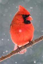 Preview iPhone wallpaper Red cardinal bird, tree branch, snow, winter