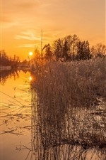 River, reeds, sunset