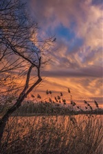 Preview iPhone wallpaper River, reeds, trees, clouds, sunset