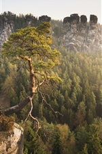 Preview iPhone wallpaper Saxon Switzerland, Elbe valley, Germany, mountains, pine tree