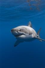 iPhone fondos de pantalla Tiburón, bajo el agua, mar azul