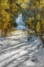 Preview iPhone wallpaper Snow, trees, winter, sun rays