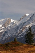 Preview iPhone wallpaper Snowy mountain, grass, trees