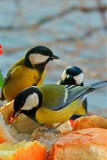 Alguns pássaros comem bolo, flores