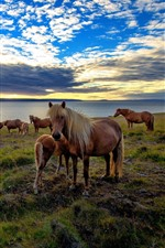 Preview iPhone wallpaper Some horses, grass, sea, clouds, sunset