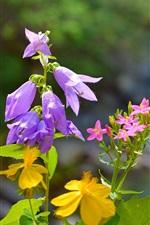 Spring flowers, purple, pink, yellow