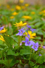 Preview iPhone wallpaper Spring yellow purple flowers