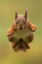 Preview iPhone wallpaper Squirrel jumping, blurry background