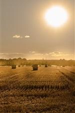 Preview iPhone wallpaper Summer, fields, hay, sunset