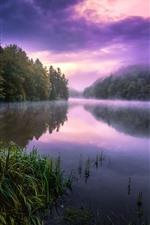 Summer, morning, fog, trees, grass
