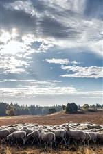미리보기 iPhone 배경 화면 여름, 양, 구름, 햇빛