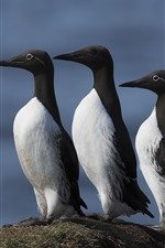 iPhone fondos de pantalla Tres pájaros