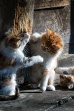 iPhone fondos de pantalla Tres gatos juguetones