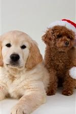 Three cute dogs, Christmas hat