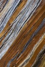 Fundo de textura de árvore