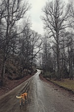 Preview iPhone wallpaper Trees, wet road, dog