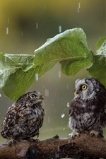 Preview iPhone wallpaper Two cute owls, green leaf umbrella, rain