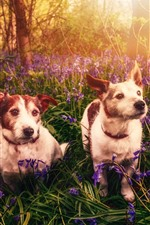 Preview iPhone wallpaper Two dogs, flowers, nature, sun rays