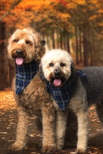 Preview iPhone wallpaper Two dogs, friends, autumn