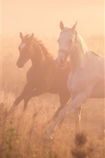 Preview iPhone wallpaper Two horses running, fog, morning