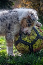 Preview iPhone wallpaper Wet puppy and football, grass